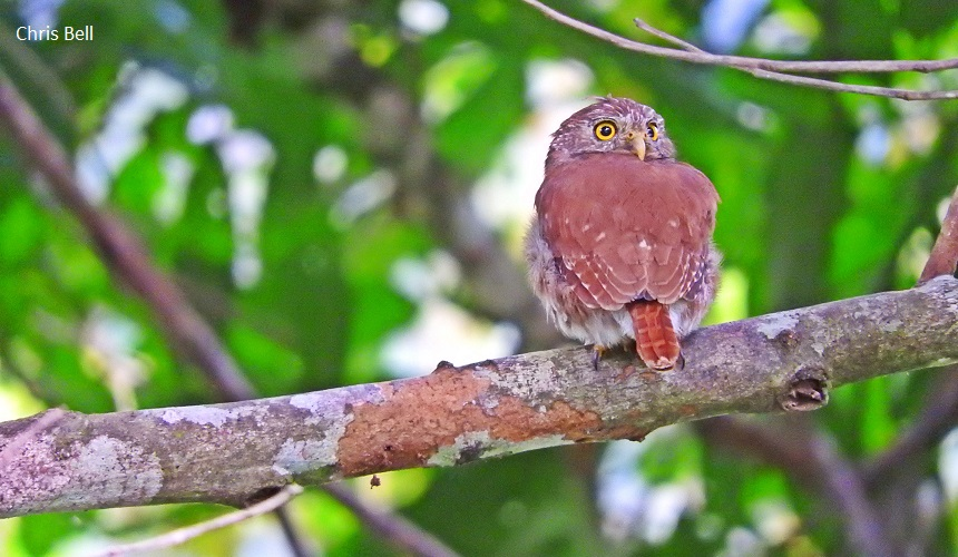 birding tours in Colombia
